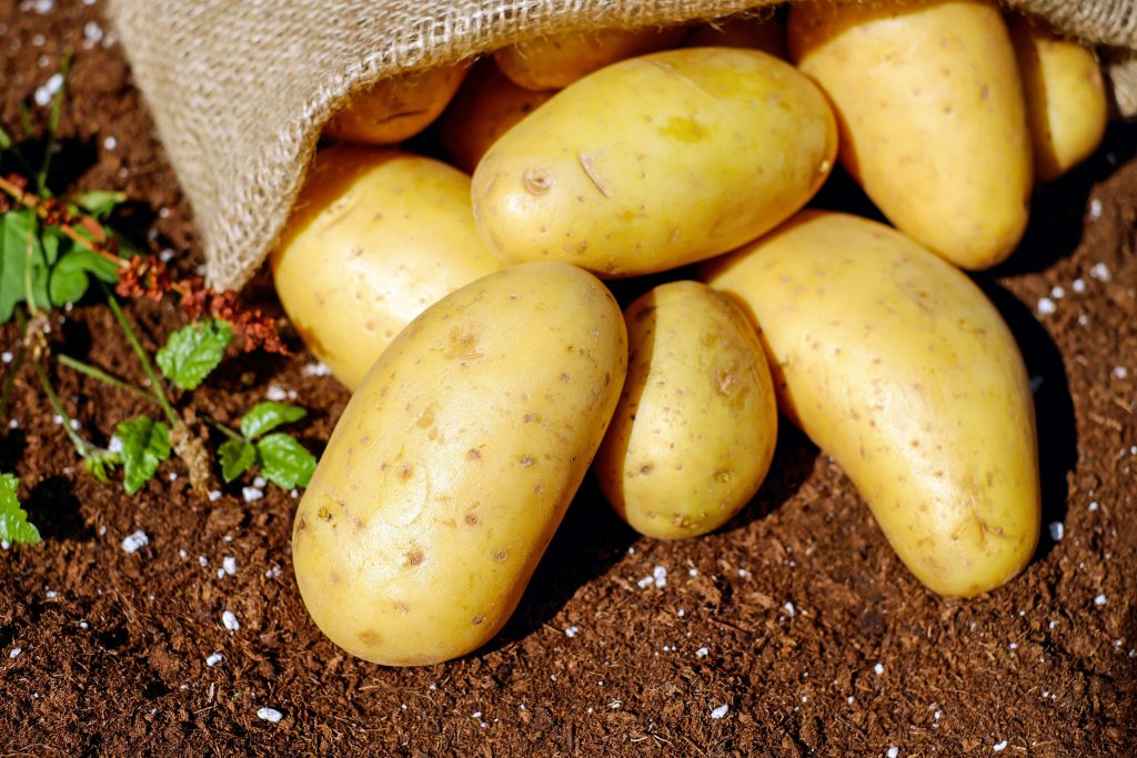 best potatoes for baking